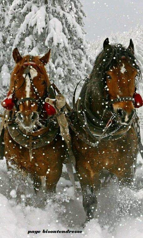 Ballade dans la neige