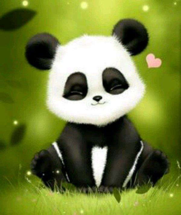 Panda ♡