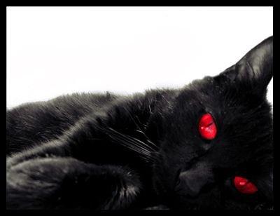 Patte de Sang - Nuage de Sang - Coeur de sang