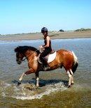 Photo de natural-horse
