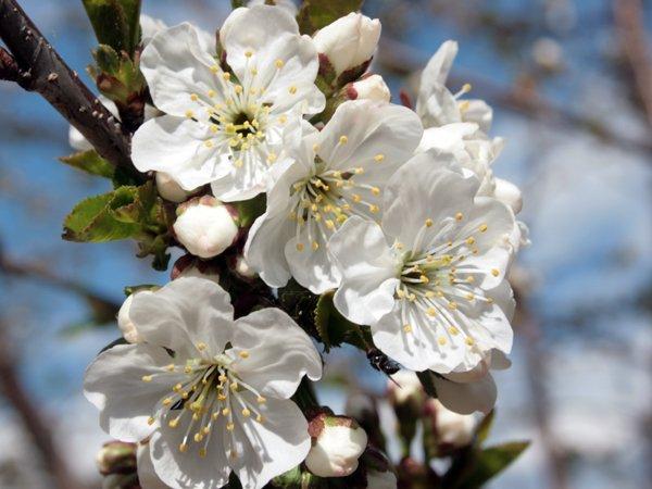 Enfin le printemps est la!