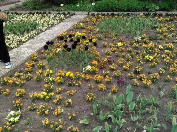 Jardin botanique de Balchik - Bulgarie 01.05.2015