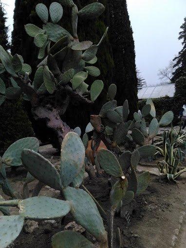 Jardin botanique de Balchik - Bulgarie 01.05.2015 (2)