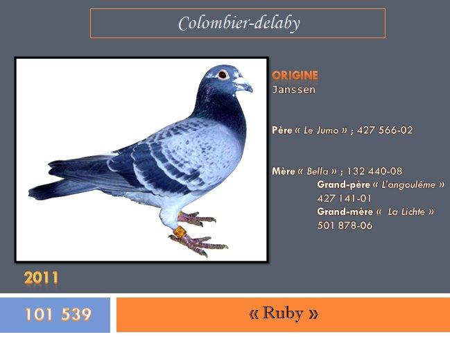 """"""" Ruby """", bague n° 101 539-11"""