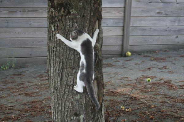 la vie du chat