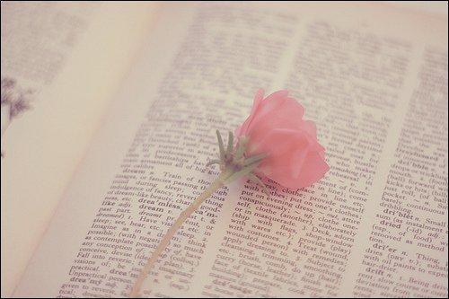 La rose d'une amitié, la rose d'un amour, la rose d'un espoir. †