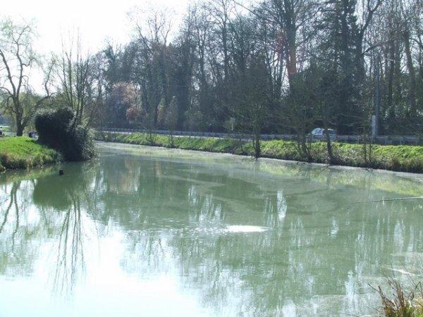 Carpe Sensation : Canal et étang de chez moi .