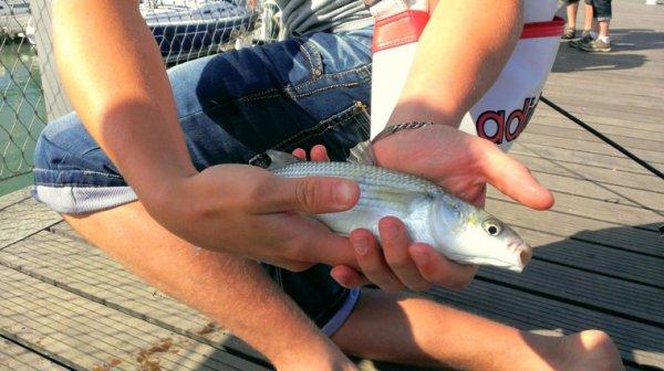 Pêche en mer , pêche au mulet