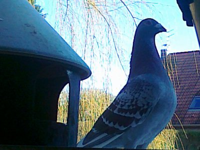 Photos prisent ce matin au pigeonnier