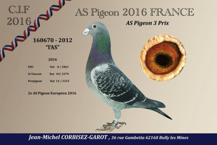 AS PIGEON FRANCAIS et 2e AS PIGEON EUROPEEN 2016 CHEZ CORBISEZ-GAROT !