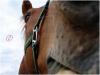 HorsesxPicturees