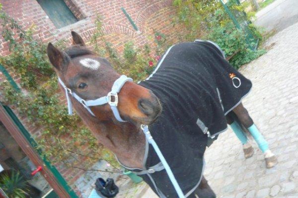 les chevaux ma pation