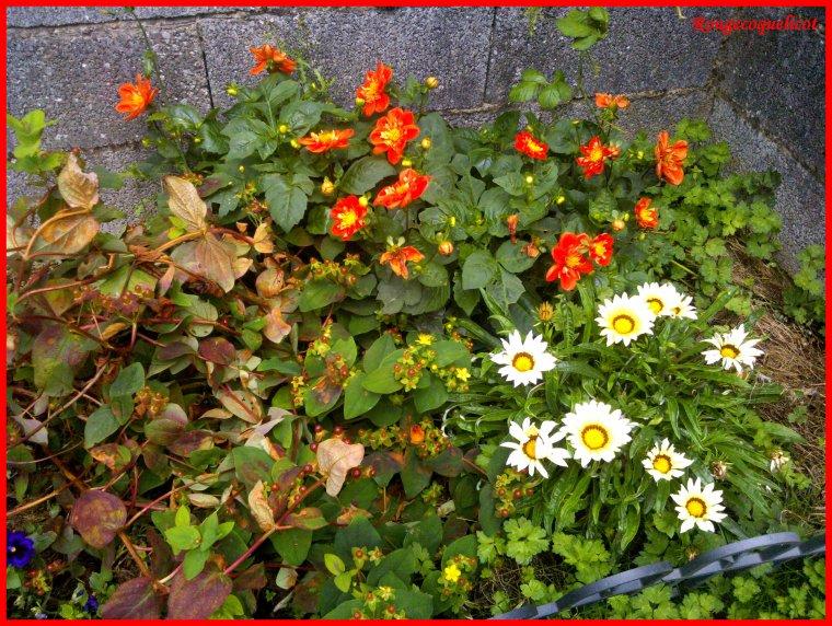 Mon petit paradis : fleurs de 2014