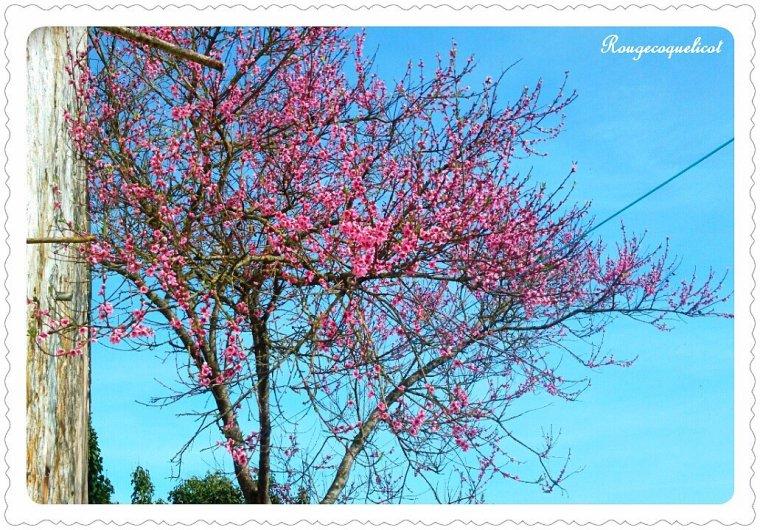 C'est le printemps, y a du boulot au pays de Rougecoquelicot .