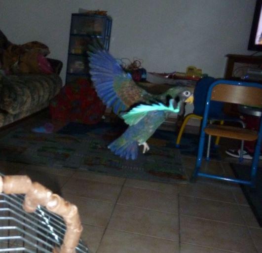 mon papillon bleu Lily