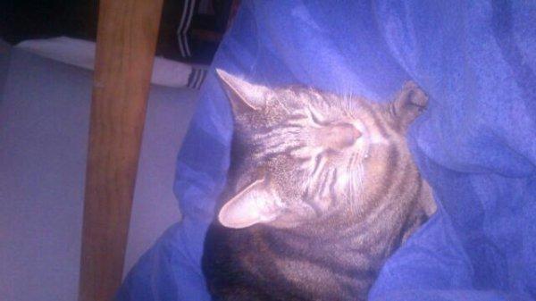 Mon chat tina