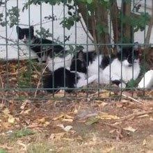 les chats de la Friche sur Facebook...