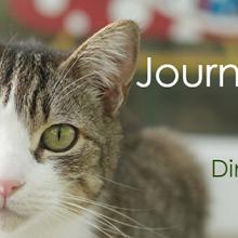 retrouvez Dudu Protect Animal sur Facebook...