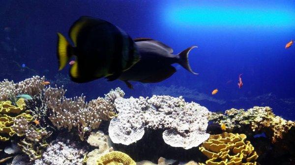 protégeons l'océan