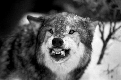 """""""Si tu ouvres tes portes, tous les loups peuvent entrer."""" D.D"""