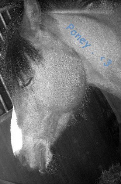 Qui veut un cheval sans défaut doit aller à pied . ♥* ~