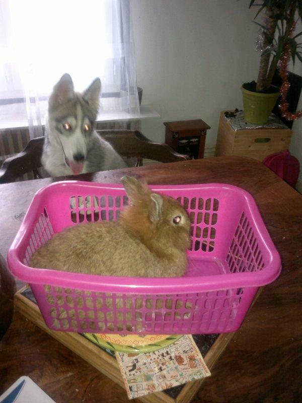 Goliath et le lapin !!! on a eu tres peur !