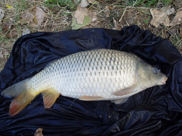 Commune 5kg 200