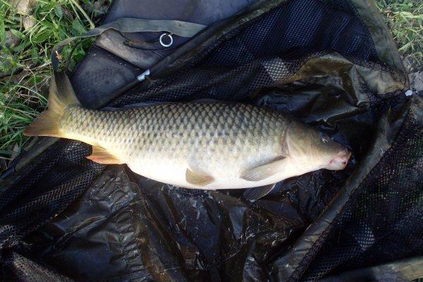 très beau poisson de 6kg.