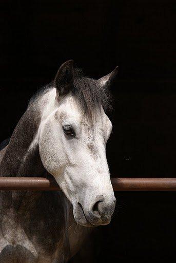 Le cheval est un cadeau de Dieu à l'homme [ Proverbe arabe ]