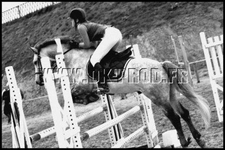 Le cheval comprend plus facilement l'homme que l'homme ne comprend le cheval. On peut donc se demander si le cheval n'est pas largement supérieur à l'homme... [ Marthe Killey-Worthington ]