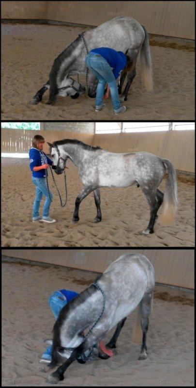 Pour parler à un cheval, il n'y a pas besoin de mots. C'est une étreinte charnelle qui alimente nos rêves [ Bartabas ]