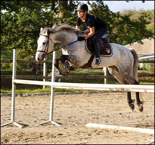 Le cheval n'a pas demandé à faire d'équitation. Le premier devoir du cavalier, c'est donc d'essayer de lui faire apprécier ce boulot [ Véronique de Saint Vaulry ]