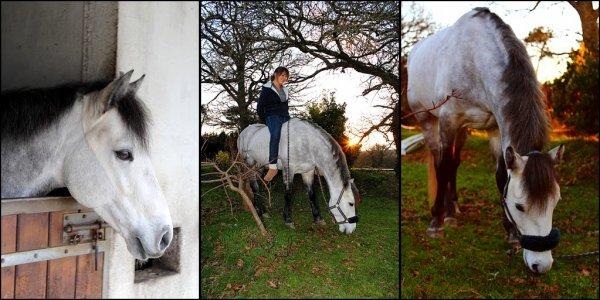 Tout le bonheur du monde est sur le dos d'un cheval [ Proverbe arabe ]