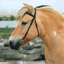 Photo de The-Horse-Creations