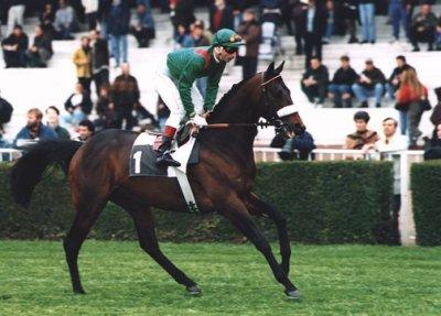 """Résultat de recherche d'images pour """"valanour horse"""""""
