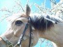 Photo de Equitation-saint-pierre