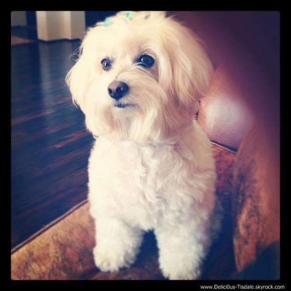 Ashley se rendant à un salon de beauté avec sa chienne Maui à Toluca Lake ce Mardi 12 Juin.