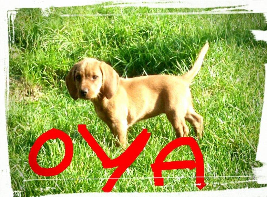 Blog de Petite-OYA
