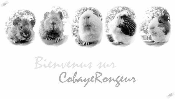இ Le Renouveau dans l'air.
