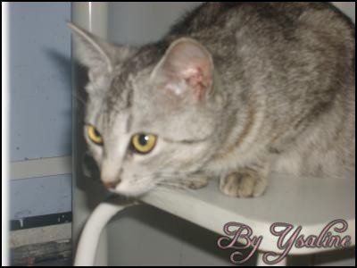 Article N°3 > Yoline, mon premier chat !!