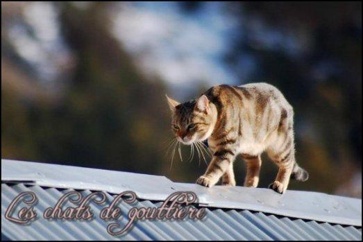 Article N°4 > Les chats de gouttière > Quelque info