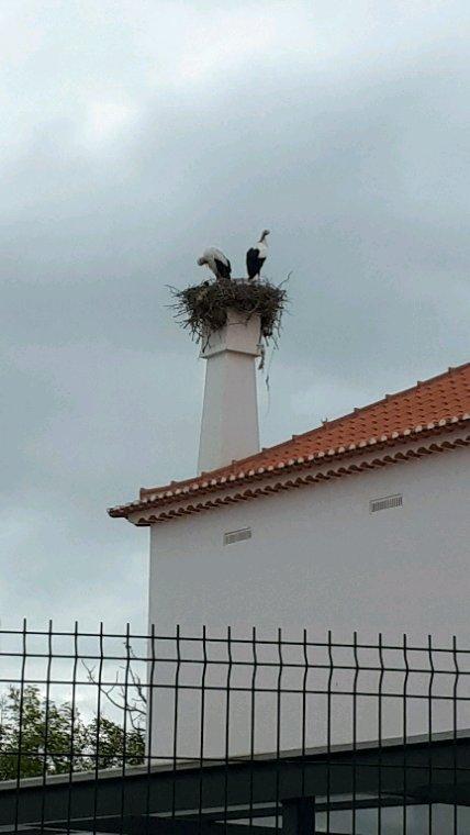 Des cigognes au Portugal
