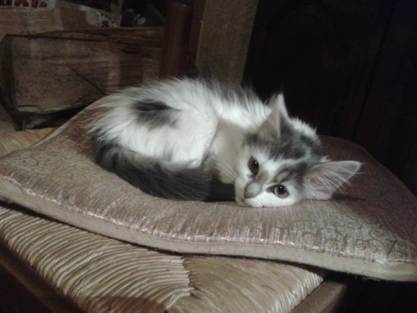 Mon chat trop chouchou !!!<3