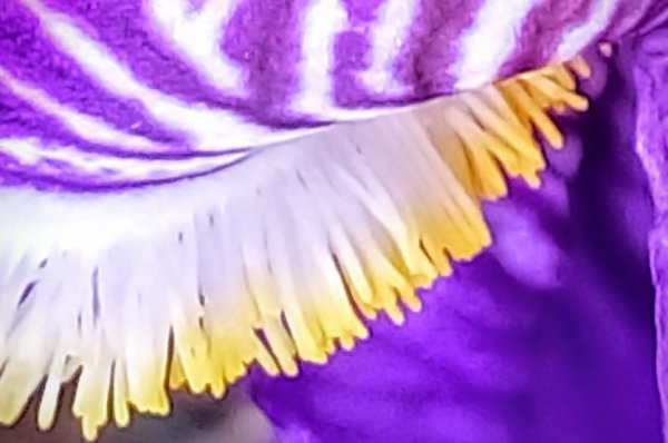 mysterieux  Iris
