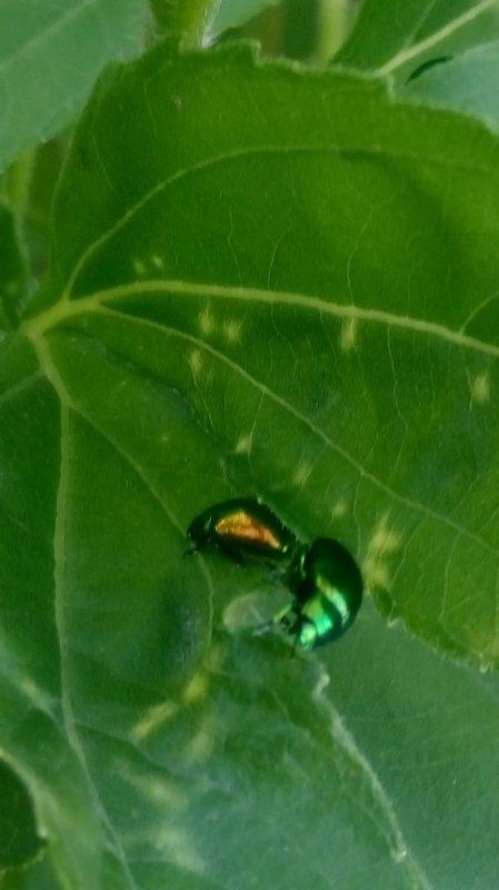 véritable petit bijou de la nature! ;-)