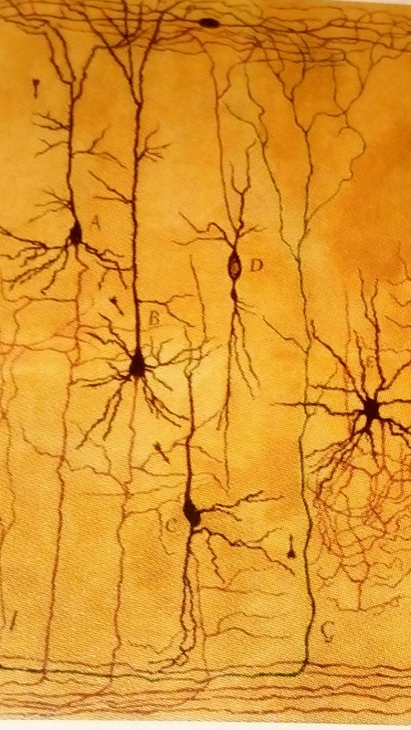 Cajal un artiste scientifique !
