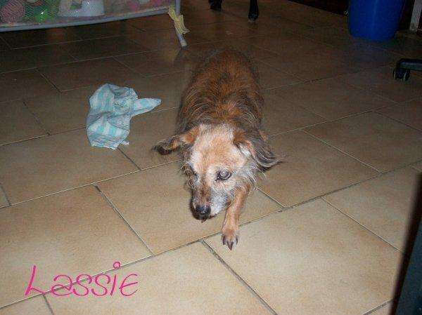 Lassie, la chienne qui ma fait rêver tous au long de mon enfance. !