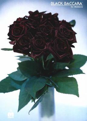Blog De Baccara59 Compositions Florales Skyrock Com