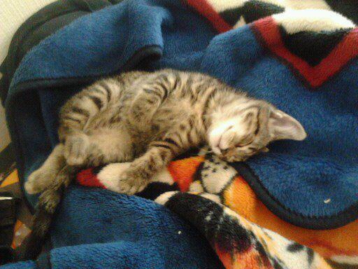 mon chat que j aime trop <3