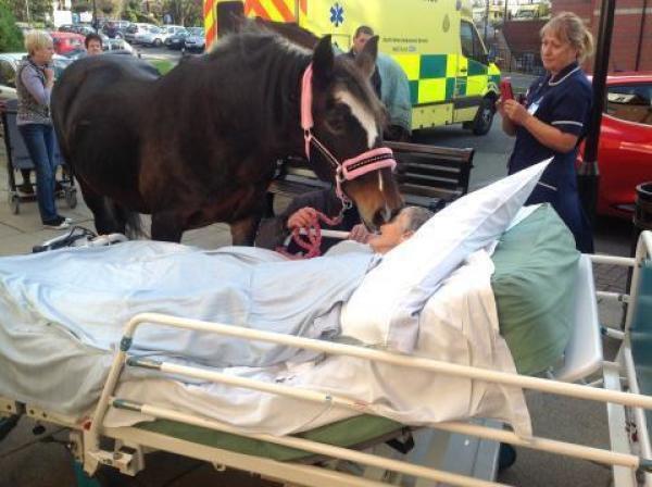 L'adieu bouleversant d'un cheval à sa propriétaire !!